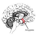 Il cervello ci aiuta a valutare un volto, prima ancora di vederlo